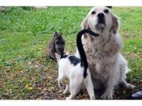 """Anneleri telef olan kedilere """"Pamuk"""" isimli köpek sahip çıktı"""