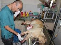 Antalya'da sokak köpeğini tüfekle vurdular