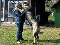 125 bin lira değerinde Sivas Kangal