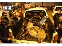 Dağ keçisini vuran iki şahıs yakalandı