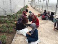 Suriyeli mültecilere serada sebze üretimi eğitimi
