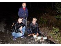 Ormanlık alanda beslediği tilkiye otomobil çarptı