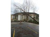 Rüzgara dayanamayan ağaç elektrik tellerine dayandı