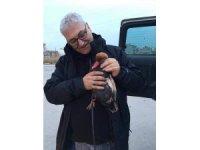 Eber gölünde silahla vurulan Macar ördeği tedavi altına alındı