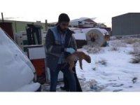 Yavru köpekler donmak üzereyken kurtarıldı