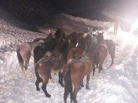 Karda mahsur kalan atlar için seferberlik