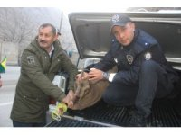 Yarıl dağı keçisine ilk müdahaleyi polisler yaptı