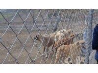 Sokak hayvanları için sosyal sorumluluk projesi