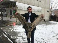 Erzurum'da yaralı baykuş bulundu