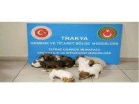 Kapıkule'de yurda kaçak sokulmak istenen 20 yavru köpek bulundu