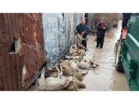Selin vurduğu köylerde hayvanlar telef oldu