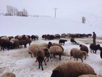 Zorlu kış şartlarında hayvancılık