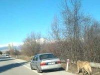 Arabaya bağladığı köpeği çekerek götürdü