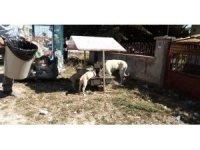 Aslanapa Belediyesi hayvanlar için beslenme noktaları yerleştirdi
