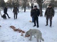 Sokak hayvanlarına polis merhameti