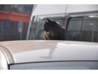 Sokak kedisinin güneş keyfi