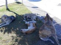 """MAD Başkanı İsmail Karataş """"Atık yemekler sokak hayvanlarına"""""""