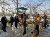 Doğa tutkunları sokak köpeklerini unutmadı