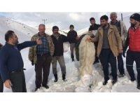 Karda mahsur kalan at 5 saatlik çalışmayla kurtarıldı