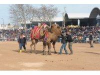 Biga'da deve güreşleri nefes kesti