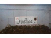 Sivas'ta 175 kilo tütün ele geçirildi