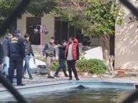 Marmaris'te bir domuz havuza düştü