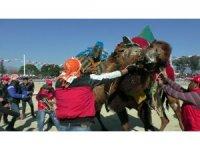 Pehlivan develer nefes kesti
