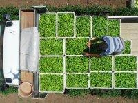 'Çiftçi örgütlenirse gıda fiyatları düşer'