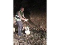 Elazığ'da kaçak avlanan keklikler doğaya salındı