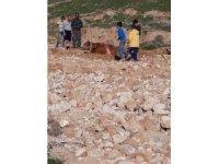 Cizre'de bataklığa saplanan ineği itfaiye ekipleri kurtardı