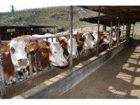 TKDK'dan hayvancılık yatırımına destek