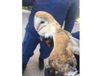 Jandarmanın bulduğu yaralı beyaz baykuş tedavi altına alındı