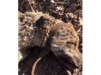 8 yavrusu olan köpek silahla vurularak öldürüldü