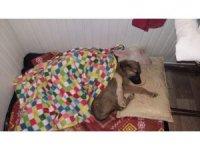 Köpek ile kuzu kucak kucağa uyuyor