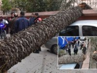 Ağaç araçların üzerine devrildi