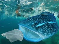 104 milyon ton plastik doğaya karışacak!