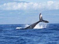 Ölü balinanın midesinden 40 kilogram plastik çıktı