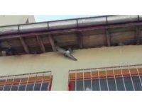 Öğretmenler mahsur kalan güvercini kurtarmak için seferber oldu