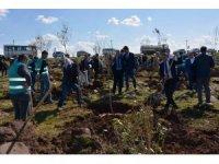 Siverek'te 'Adalet Ormanı' oluşturuldu