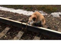 Rusya'da köpeği raylara bağladılar