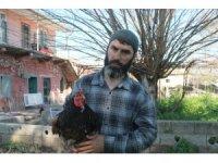 Yumurtası 400, civcivi bin lira