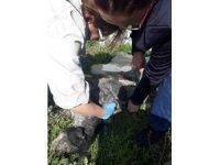 Gömülü olarak bulunan 15 köpek ve 1 kedi için belediyeye idari cezası