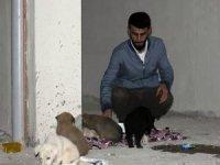 Siirt'te 7 yavru köpeği ölüme terk ettiler