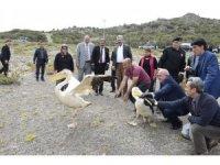 Tedavileri tamamlanan 2 pelikan ve leylek doğaya salındı