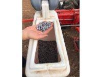 Aslanapa'da tarımda alternatif ürün ayçiçek ekimi