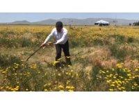 Milletvekili Çelebi'den, 14 Mayıs Dünya Çiftçiler Günü mesajı