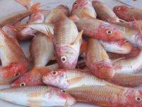 Balıklarımız tescillendi