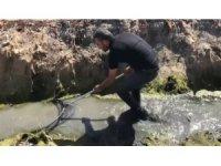 Amik Ovası'nda kurtarılan balıklar göle taşındı