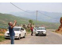 Dağ keçileri yola indi, onları görenler cep telefonuna sarıldı