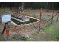 Çam kese böceği ile biyolojik mücadele devam ediyor